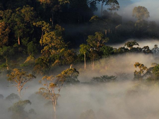 Borneo_AratiRao